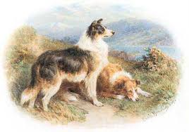 bearded collie mdr1 bc museum border collie cousins 2