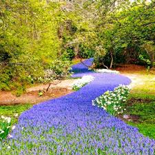 you u0027ve never seen anything like this blooming river of flowers in