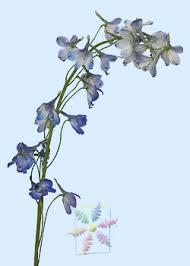 delphinium flowers delphinium flower information delphinium cut flower flower