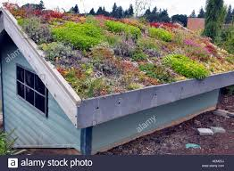 roof garden plants roof of building covered in rock succulent plants oregon garden