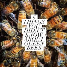 beekeeping like a 6 things you didn u0027t know about queen bees