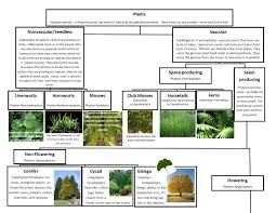 classification of plants vascular and non vascular learning