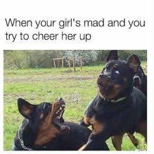 U Still Mad Meme - when your girl is mad at you dogs pinterest