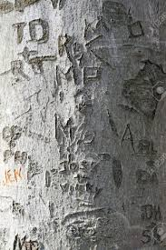 initials carved in tree a closeup texture of a tree trunk with a whole bunch of names