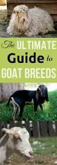 83 best images about homestead livestock on pinterest selenium