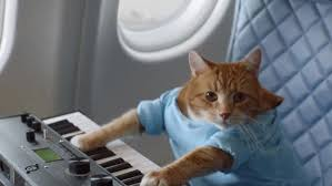 Cat Playing Piano Meme - the internet memes in this delta safety video basically just earned