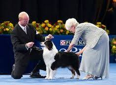 westminster show winners search show dogs and the