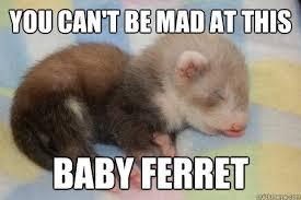 Ferret Meme - ferret memes quickmeme