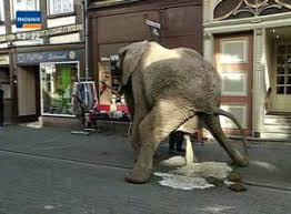 Elephant Meme - create meme slon slon asian elephant zoo pictures