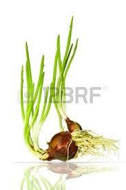 Flower Light Bulbs - flower light bulb images u0026 stock pictures royalty free flower
