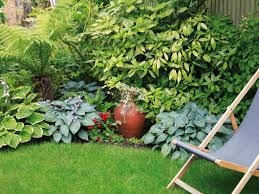 Shady Backyard Ideas by How And When To Transplant Hostas Diy