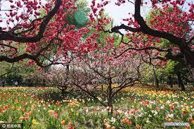 Beijing Botanical Garden Tulips Blossom In Beijing Botanical Garden Xinhua News Cn