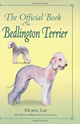 feeding a bedlington terrier bedlington terrier small dog breed info