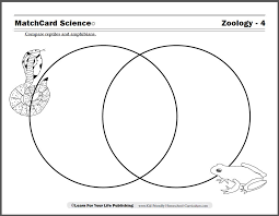 reptiles and amphibians worksheet