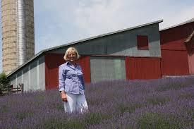 boyne city woman is living in a lavender paradise mlive com