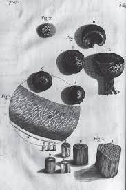 discovering the u0027true form u0027 hooke u0027s micrographia and the visual