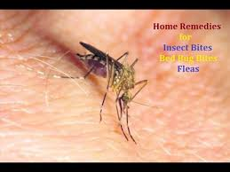 Difference Between Bed Bug Bites And Mosquito Bites Treat Insect Bites Mosquito Bites Bed Bug Bites And Fleas At