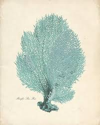 dried sea fans for sale 52 best coral illustration images on pinterest antique prints