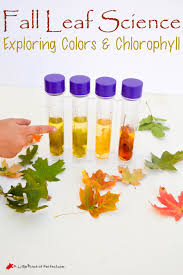 easy fall leaf science experiment exploring colors u0026 chlorophyll