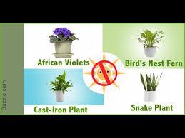 indoor plants that don t need sunlight dress up your home with these indoor plants that don t need sunlight