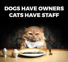 Dog Owner Meme - owners vs staff funny pictures quotes memes funny images