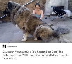 Funny Russian Memes - th id oip 4ywiqr5tkaqo8bd4kunarqhago