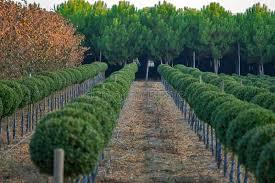 outdoor nursery of ornamental plants stock photo image