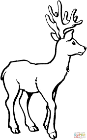 deer 7 coloring page free printable coloring pages