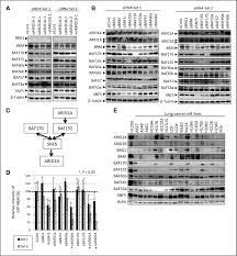 swi snf factors required for cellular resistance to dna damage