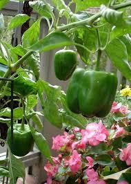best 25 small space gardening ideas on pinterest small garden