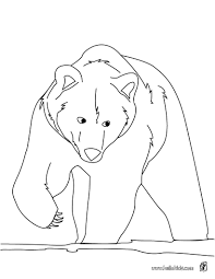 brown bear coloring pages hellokids com