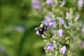 native plants extension master gardener create a pollinator paradise extension master gardener