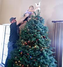 costco live christmas trees home decorating interior design