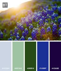 Bluebonnet Flowers - color palette of a west texas hill covered in bluebonnet flowers