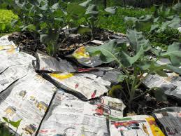 vegetable garden mulch experiments