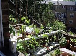 vegetables brooklyn roof garden