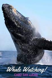 best 25 whale watching boat ideas on pinterest whale watching