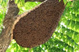 Bee Deterrent For Patio 15 Fast Ways To Get Rid Of Bees Effectively Kill Or Repel Them