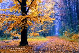 forest golden pathway trees autumn tropical desktop wallpaper