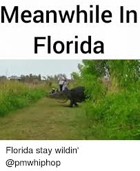 Funny Florida Memes - 25 best memes about meanwhile in florida meanwhile in florida