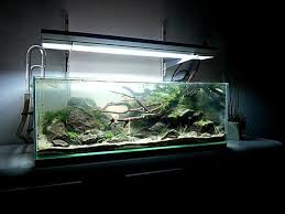 Aquarium Decor Ideas 806 Best Akwarium Images On Pinterest Aquascaping Fish Tanks