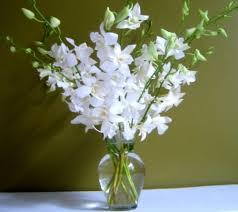 white orchids white orchids 10 stems of white orchids