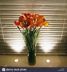 Calla Lily Vase Life Vase Of Orange Red Calla Lilies On Windowsill With Uplighters