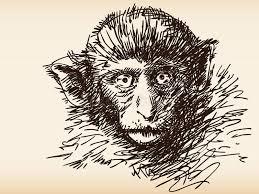 monkey sketch stock vector image 40508496