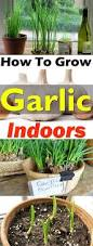 1241 best grow images on pinterest gardening organic gardening