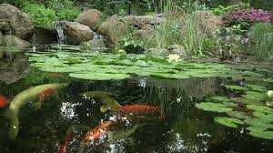 Aquascapes Com Pond Construction Pond Maintenance Water Feature Installers In