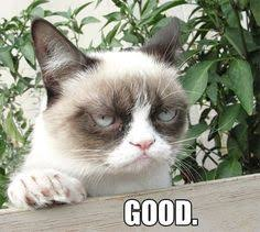 Good Meme Grumpy Cat - 50 shades of grumpy cat chap 23 as ns a better class of asexuality