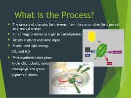 What Happens During The Light Reactions Of Photosynthesis Photosynthesis And Respiration Powerpoints