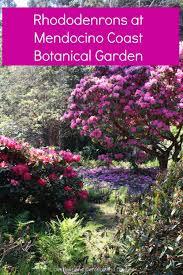 Fort Bragg Botanical Garden Rhododendrons At Mendocino Coast Botanical Gardens Destinations