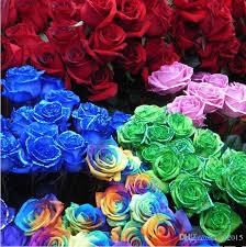 Cheap Flower Seeds - 2017 rainbow rose flower seeds rose seeds rainbow blue black green